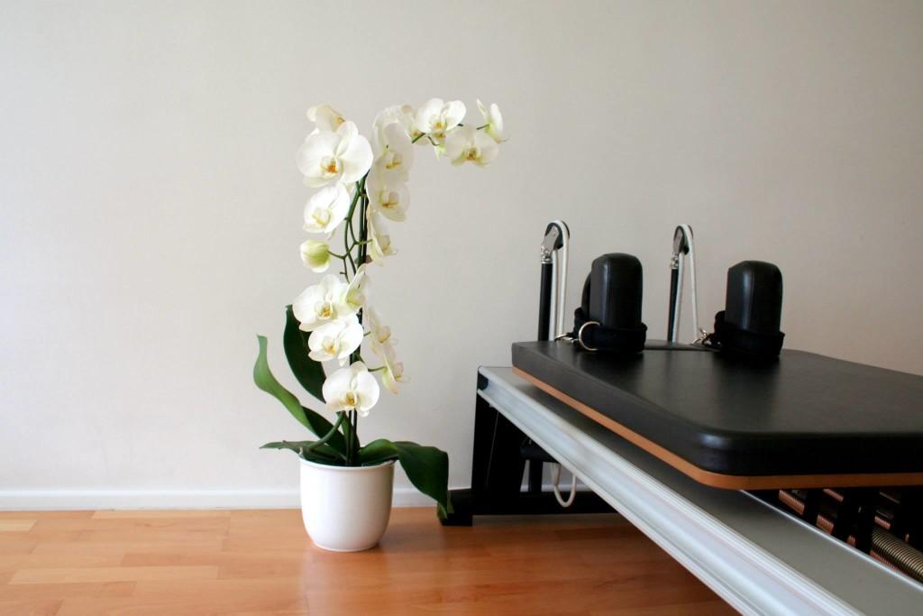 INST orhideja